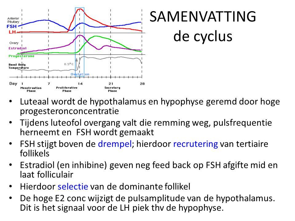 SAMENVATTING de cyclus • Luteaal wordt de hypothalamus en hypophyse geremd door hoge progesteronconcentratie • Tijdens luteofol overgang valt die remm