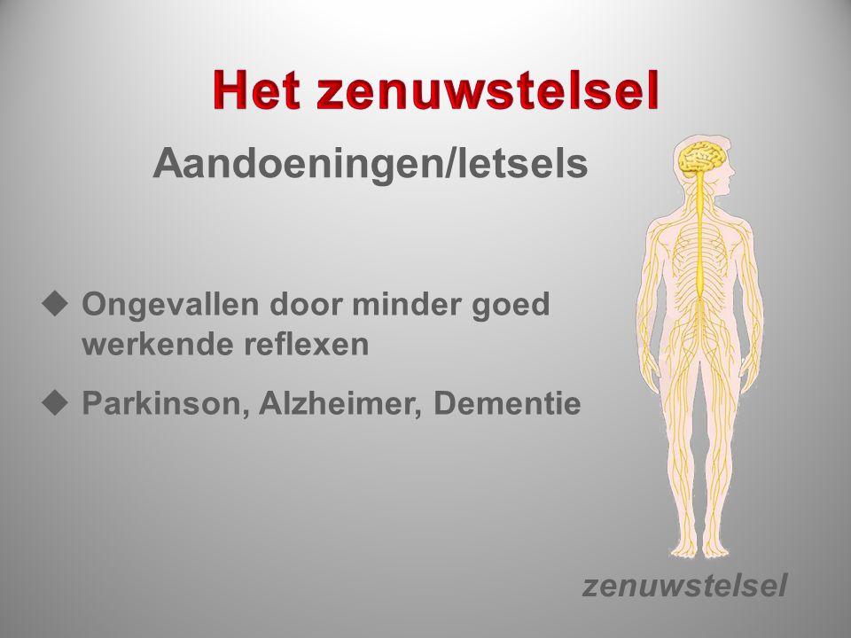 Aandoeningen/letsels zenuwstelsel  Ongevallen door minder goed werkende reflexen  Parkinson, Alzheimer, Dementie