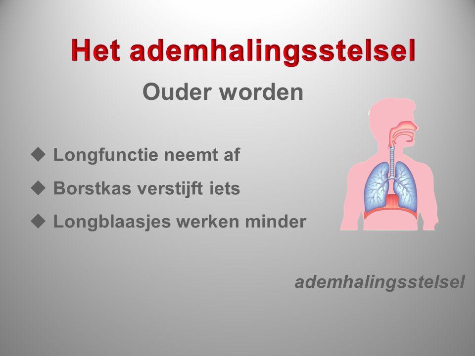 ademhalingsstelsel  Longfunctie neemt af  Borstkas verstijft iets  Longblaasjes werken minder Ouder worden