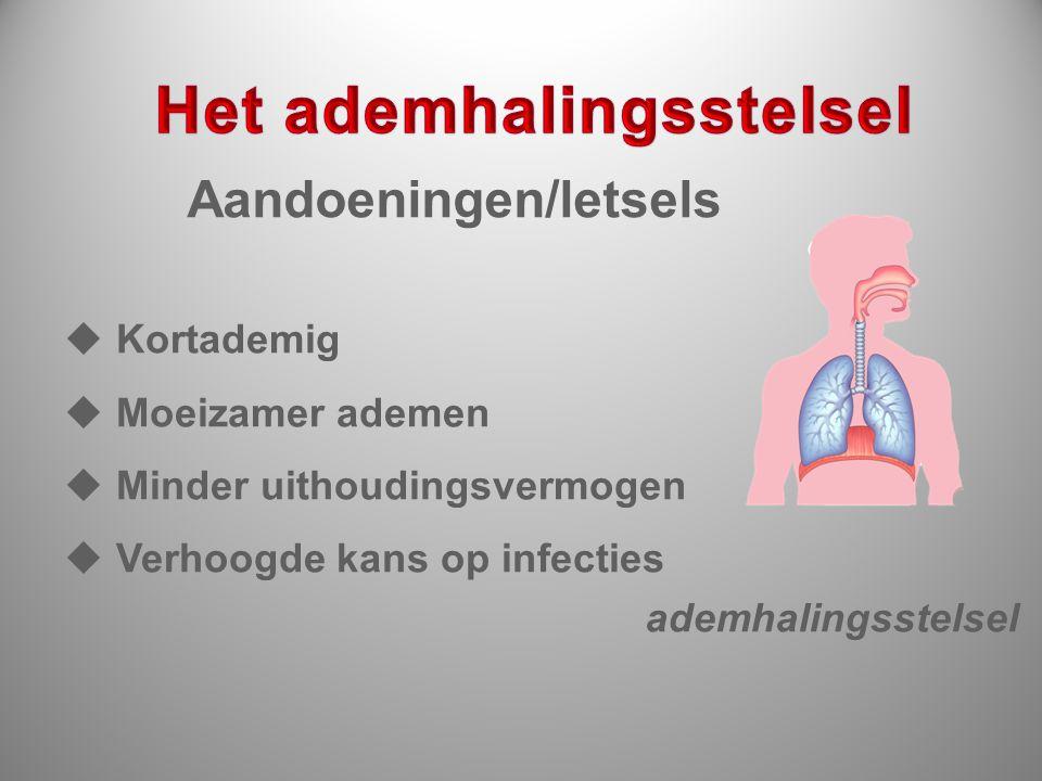 ademhalingsstelsel  Kortademig  Moeizamer ademen  Minder uithoudingsvermogen  Verhoogde kans op infecties Aandoeningen/letsels