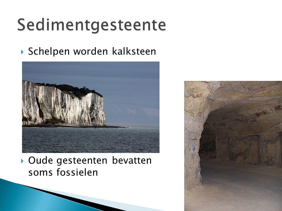  Schelpen worden kalksteen  Oude gesteenten bevatten soms fossielen