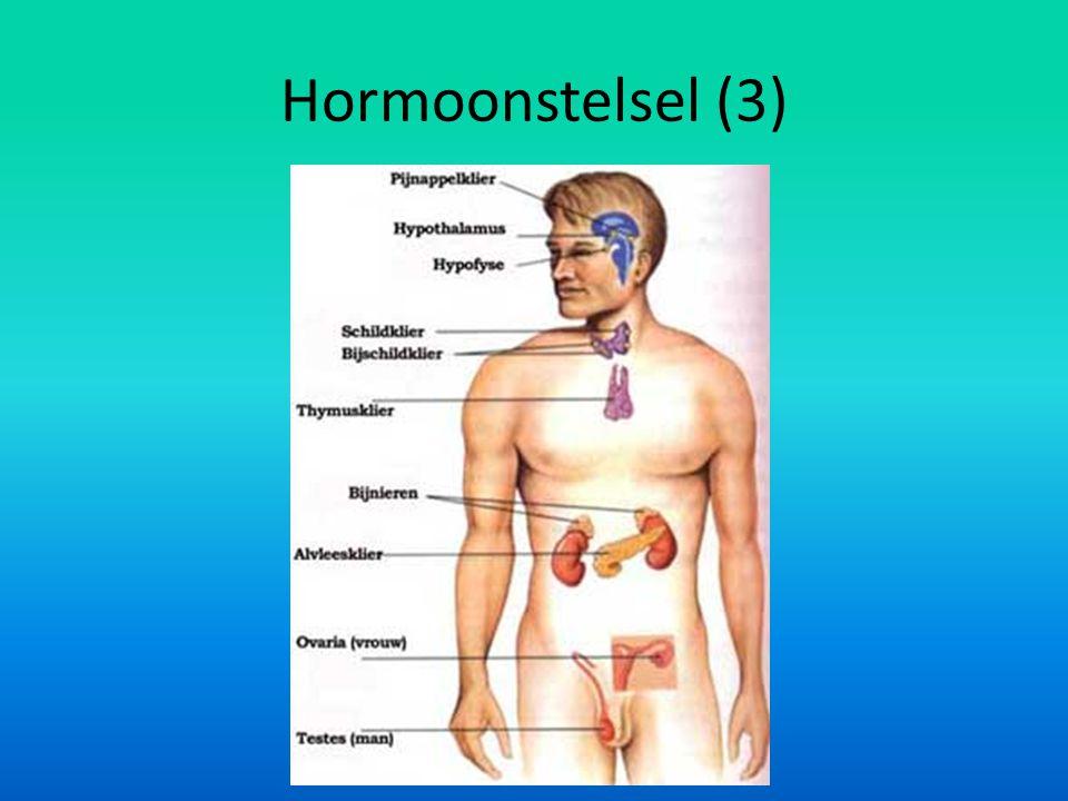 Hormoonstelsel (3)