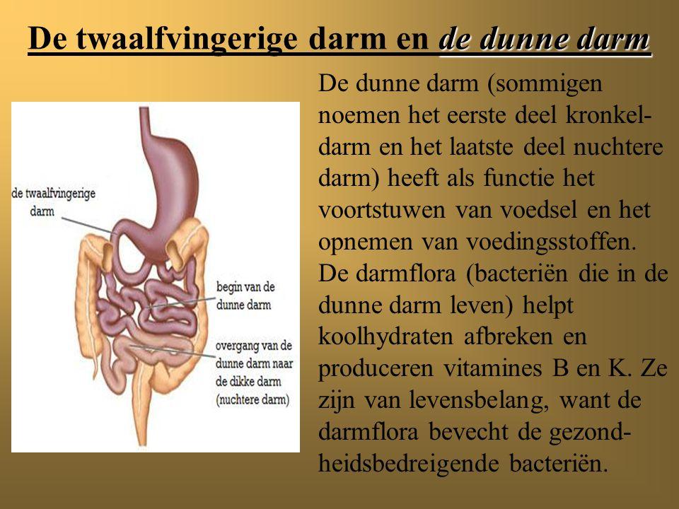 De twaalfvingerige darm De twaalfvingerige darm en de dunne darm De twaalfvingerige darm is het eerste deel van de dunne darm. De naam is afkomstig va