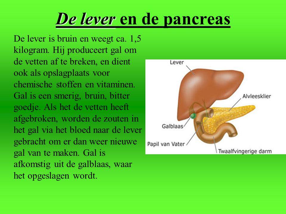 de dunne darm De twaalfvingerige darm en de dunne darm De dunne darm (sommigen noemen het eerste deel kronkel- darm en het laatste deel nuchtere darm)