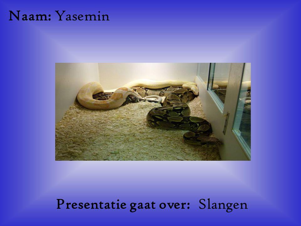 """Naam: Yasemin Presentatie gaat over: Slangen Klik op """"Naam"""". Vul je naam in. Doe hetzelfde met """"hobby"""" Hier kun je een foto / tekening Invoegen"""