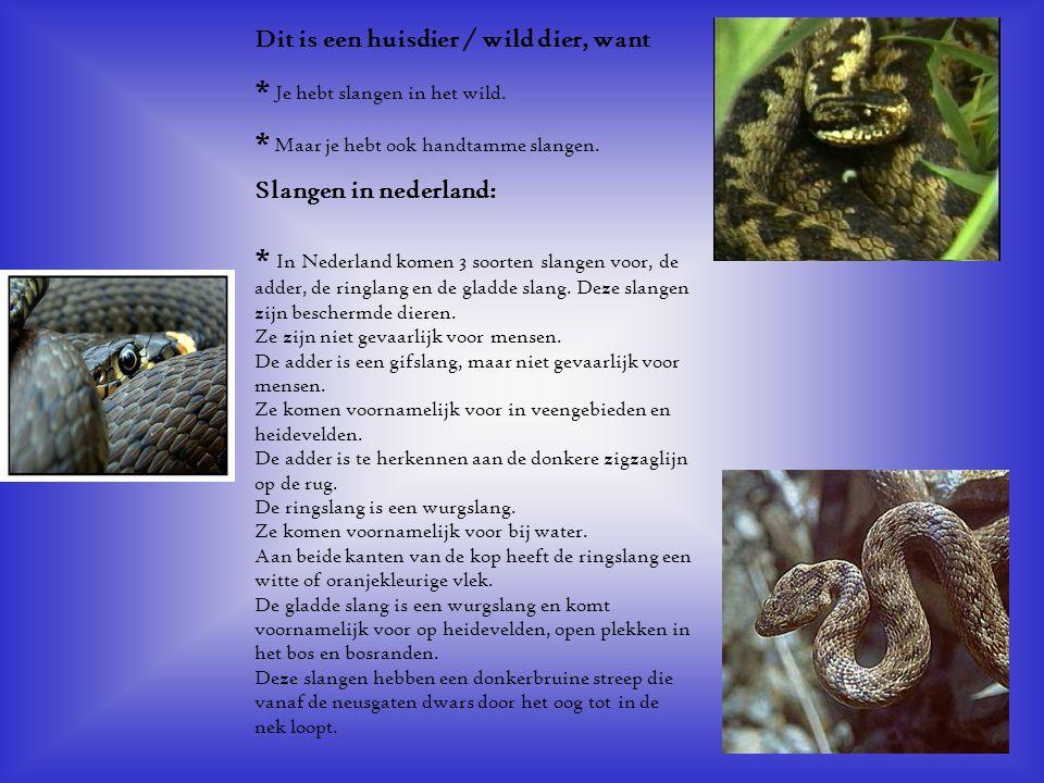 Dit is een huisdier / wild dier, want * Je hebt slangen in het wild. * Maar je hebt ook handtamme slangen. Slangen in nederland: * In Nederland komen