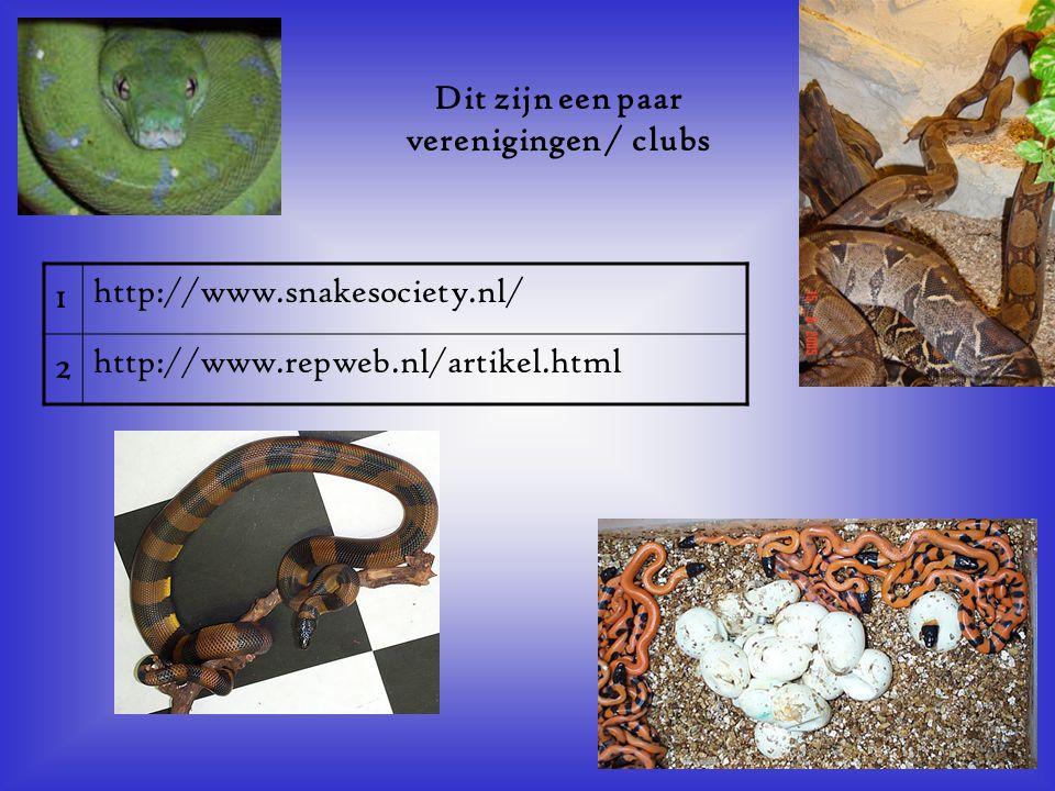 1 http://www.snakesociety.nl/ 2 http://www.repweb.nl/artikel.html Dit zijn een paar verenigingen / clubs Als er geen verenigingen zijn, klik dan met d