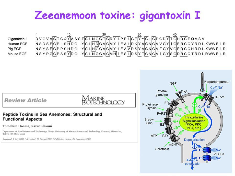 Zeeanemoon toxine: gigantoxin I