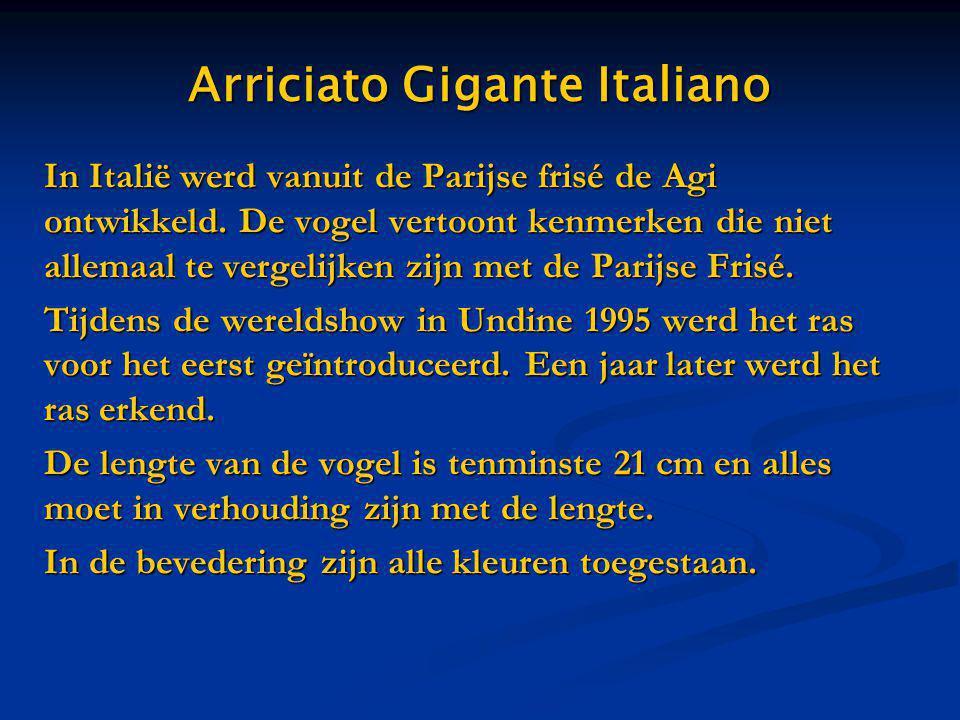 Arriciato Gigante Italiano In Italië werd vanuit de Parijse frisé de Agi ontwikkeld. De vogel vertoont kenmerken die niet allemaal te vergelijken zijn