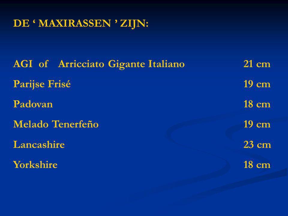 DE ' MAXIRASSEN ' ZIJN: AGI of Arricciato Gigante Italiano21 cm Parijse Frisé 19 cm Padovan 18 cm Melado Tenerfeño19 cm Lancashire23 cm Yorkshire18 cm
