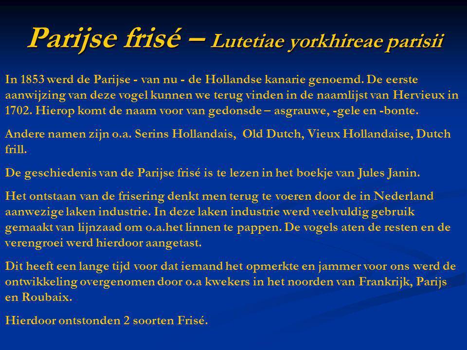 Parijse frisé – Lutetiae yorkhireae parisii In 1853 werd de Parijse - van nu - de Hollandse kanarie genoemd. De eerste aanwijzing van deze vogel kunne