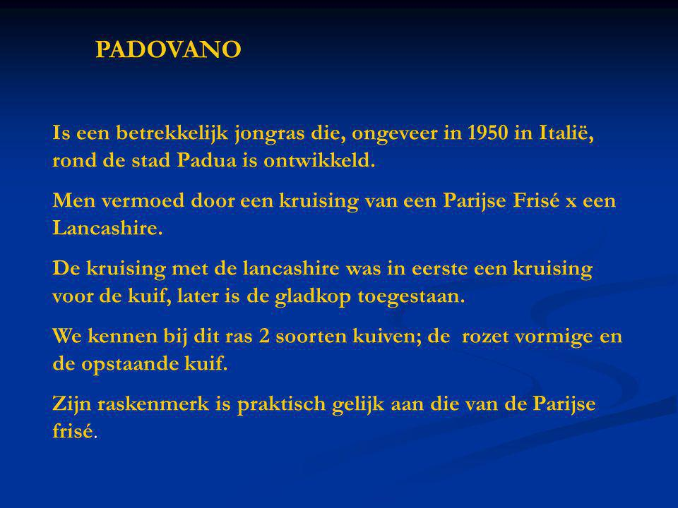 PADOVANO Is een betrekkelijk jongras die, ongeveer in 1950 in Italië, rond de stad Padua is ontwikkeld. Men vermoed door een kruising van een Parijse