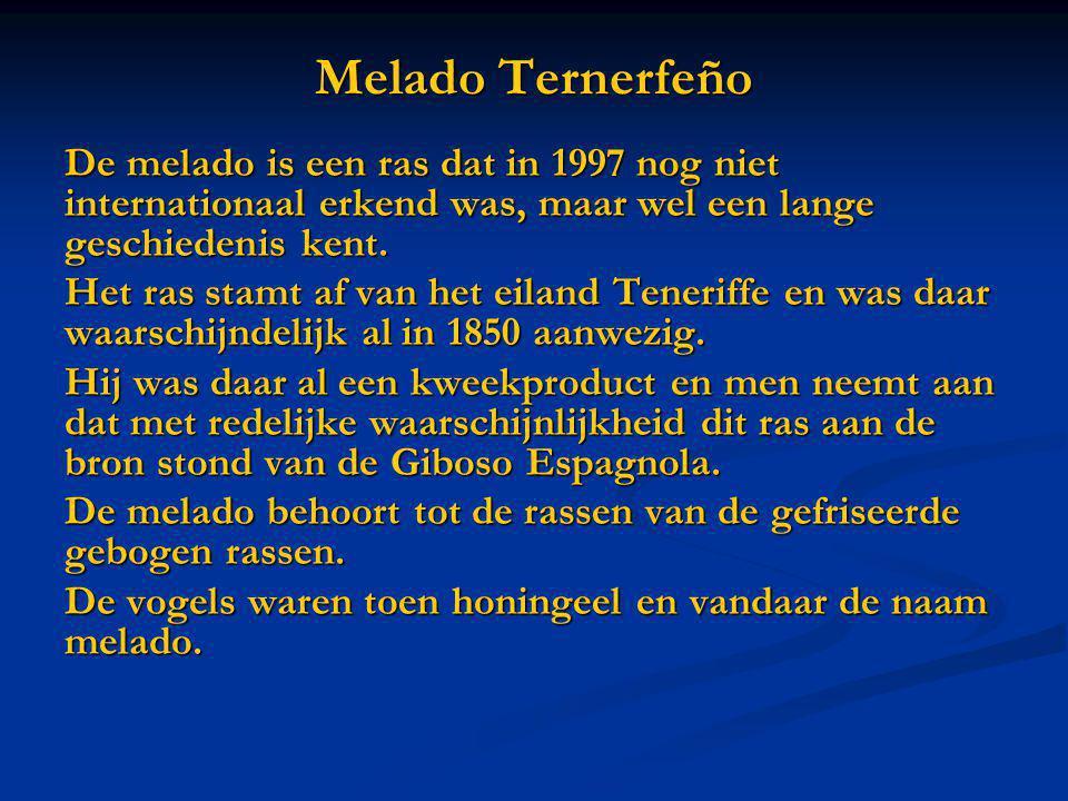 Melado Ternerfeño De melado is een ras dat in 1997 nog niet internationaal erkend was, maar wel een lange geschiedenis kent. Het ras stamt af van het