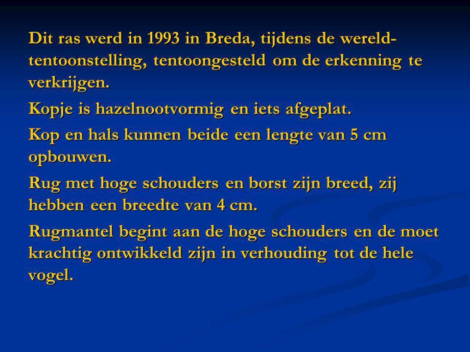 Dit ras werd in 1993 in Breda, tijdens de wereld- tentoonstelling, tentoongesteld om de erkenning te verkrijgen. Kopje is hazelnootvormig en iets afge