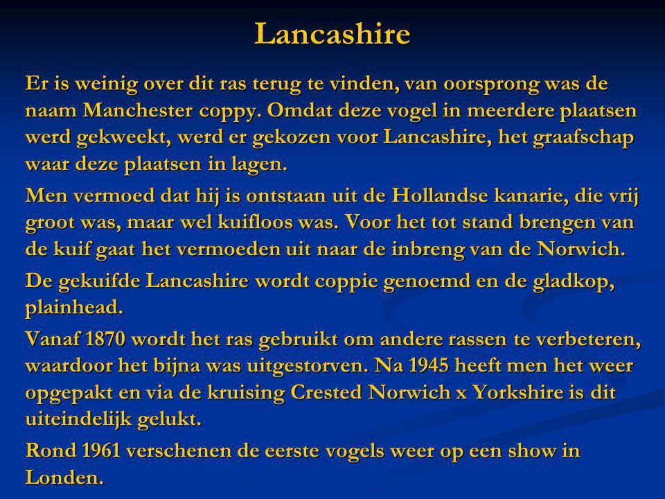 Lancashire Er is weinig over dit ras terug te vinden, van oorsprong was de naam Manchester coppy. Omdat deze vogel in meerdere plaatsen werd gekweekt,