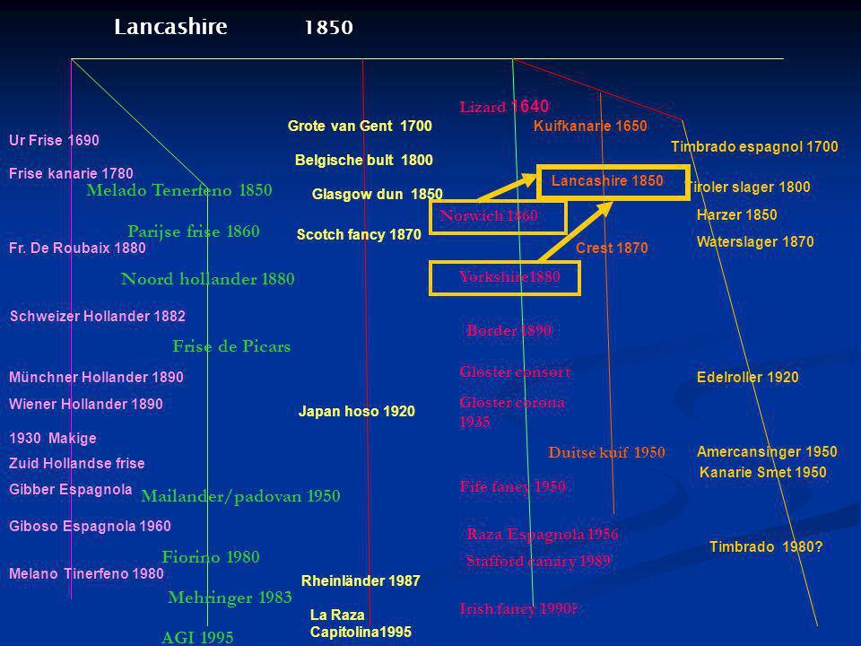 Grote van Gent 1700 Belgische bult 1800 Lancashire 1850 Lizard 1640 Norwich 1860 Yorkshire1880 Border 1890 Gloster consort Gloster corona 1935 Fife fa