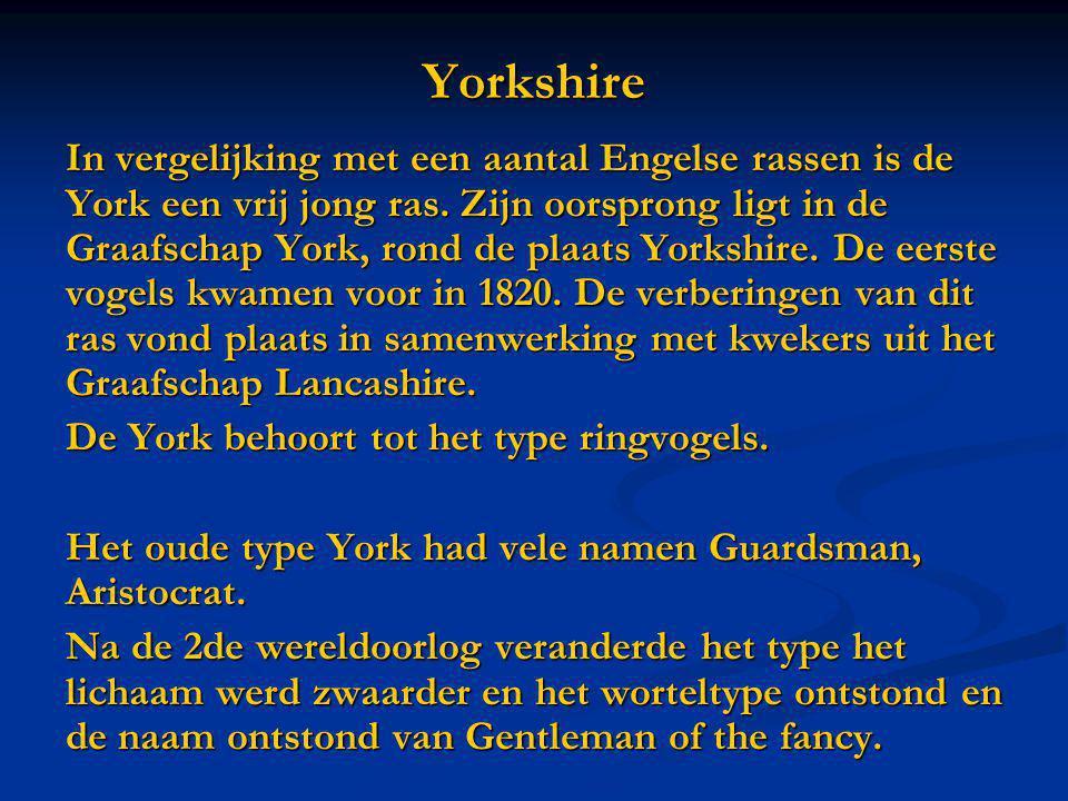 Yorkshire In vergelijking met een aantal Engelse rassen is de York een vrij jong ras. Zijn oorsprong ligt in de Graafschap York, rond de plaats Yorksh