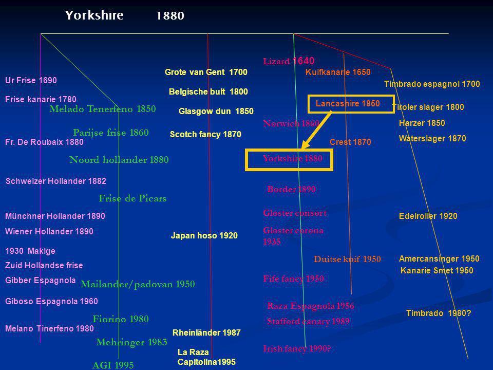 Grote van Gent 1700 Belgische bult 1800 Yorkshire 1880 Lizard 1640 Norwich 1860 Yorkshire 1880 Border 1890 Gloster consort Gloster corona 1935 Fife fa