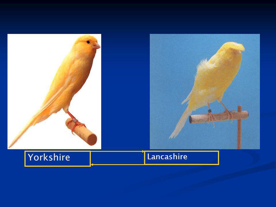 Yorkshire Lancashire