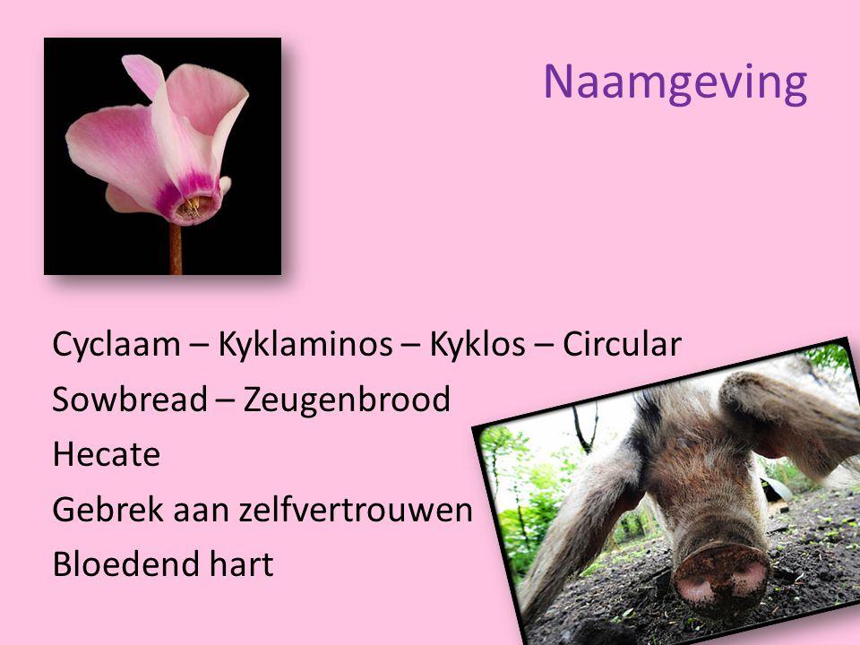 Naamgeving Cyclaam – Kyklaminos – Kyklos – Circular Sowbread – Zeugenbrood Hecate Gebrek aan zelfvertrouwen Bloedend hart