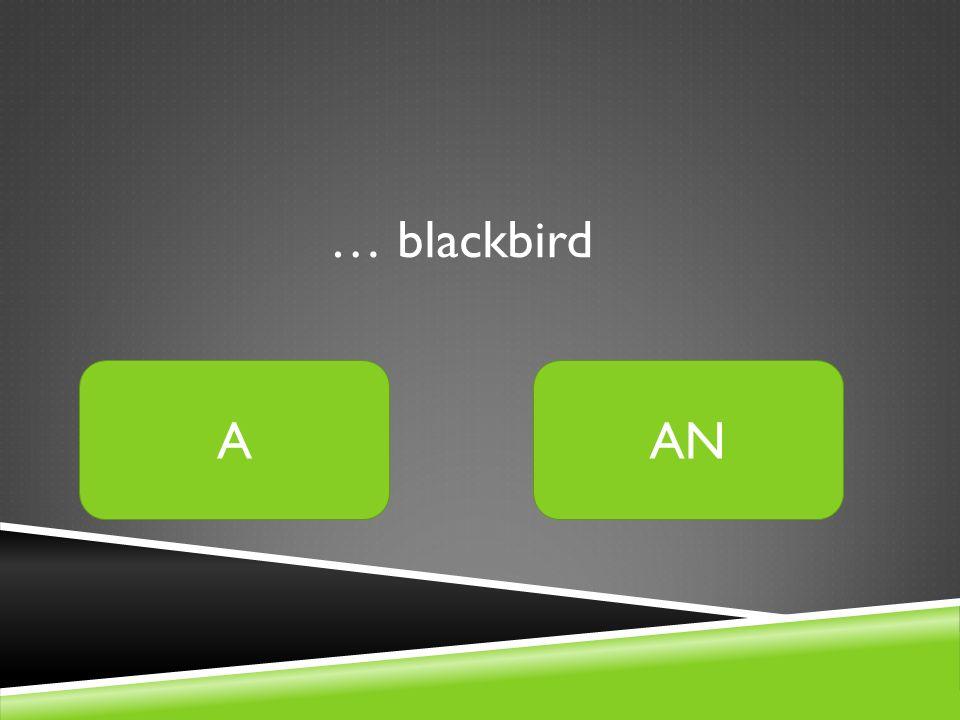 … blackbird AAN