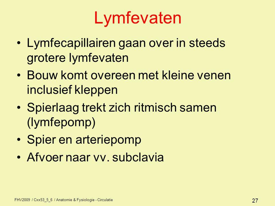 FHV2009 / Cxx53_5_6 / Anatomie & Fysiologie - Circulatie 27 Lymfevaten •Lymfecapillairen gaan over in steeds grotere lymfevaten •Bouw komt overeen met