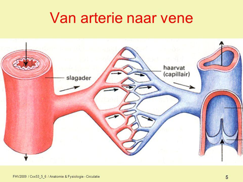 FHV2009 / Cxx53_5_6 / Anatomie & Fysiologie - Circulatie 6 Bloeddruk •Systolische bloeddruk = bloeddruk tijdens de systole (samentrekking hart) •Diastolische bloeddruk – bloeddruk tijdens de ontspanningsfase of rustfase van het hart •Hypertensie = hoge bloeddruk •Hypotensie = lage bloeddruk