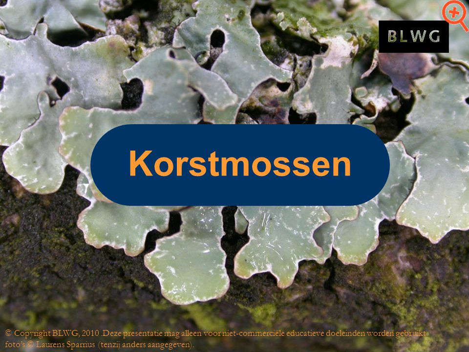 Korstmossen © Copyright BLWG, 2010.Deze presentatie mag alleen voor niet-commerciële educatieve doeleinden worden gebruikt.