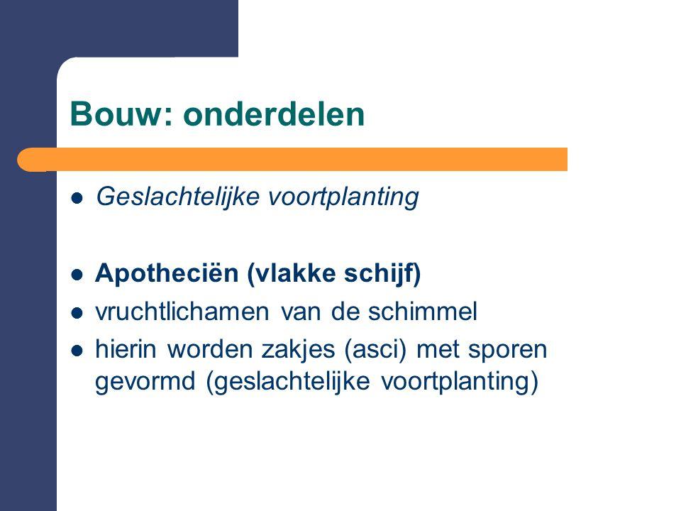 Bouw: onderdelen  Geslachtelijke voortplanting  Apotheciën (vlakke schijf)  vruchtlichamen van de schimmel  hierin worden zakjes (asci) met sporen gevormd (geslachtelijke voortplanting)
