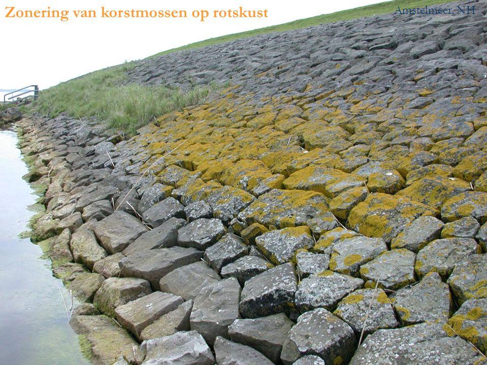 Zonering van korstmossen op rotskust Amstelmeer, NH