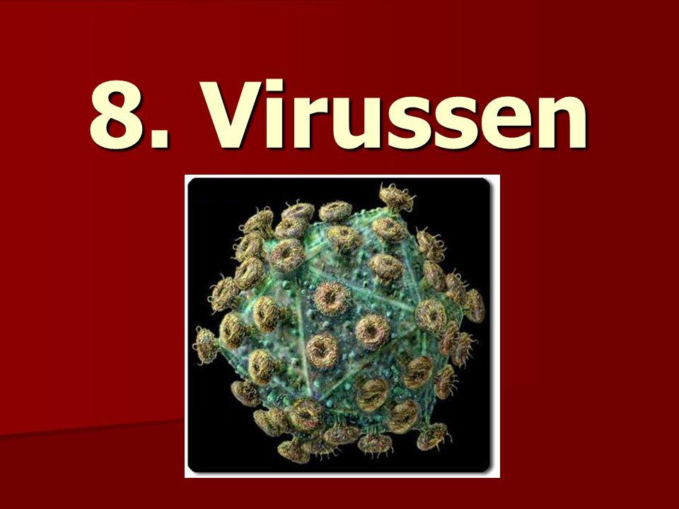 8. Virussen