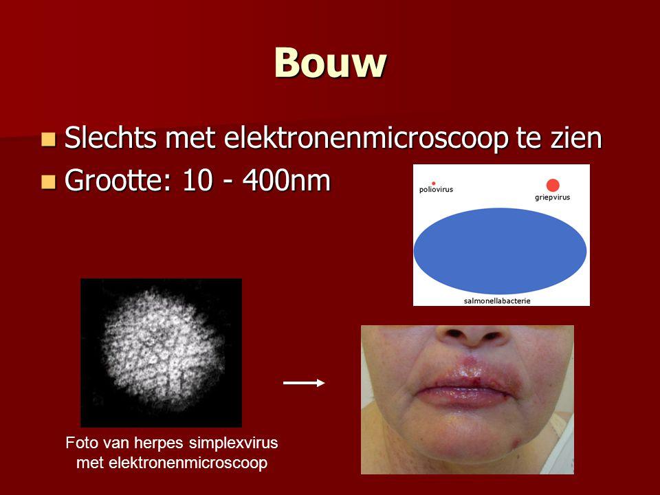 Bouw  Slechts met elektronenmicroscoop te zien  Grootte: 10 - 400nm Foto van herpes simplexvirus met elektronenmicroscoop