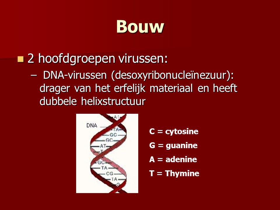 Bouw  2 hoofdgroepen virussen: – DNA-virussen (desoxyribonucleïnezuur): drager van het erfelijk materiaal en heeft dubbele helixstructuur C = cytosin