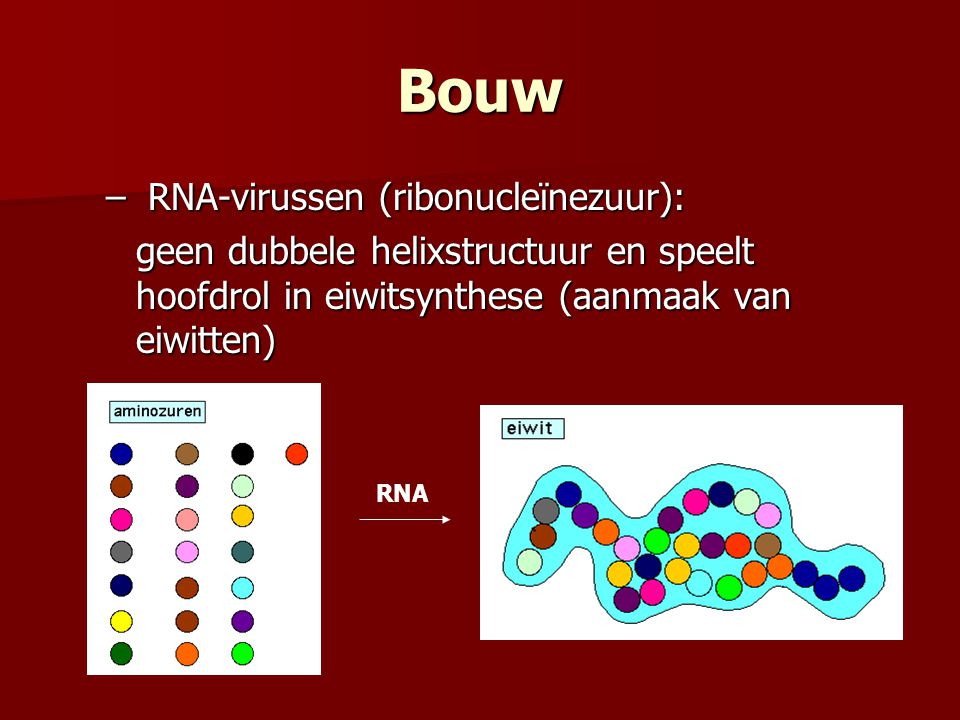 Bouw – RNA-virussen (ribonucleïnezuur): geen dubbele helixstructuur en speelt hoofdrol in eiwitsynthese (aanmaak van eiwitten) RNA