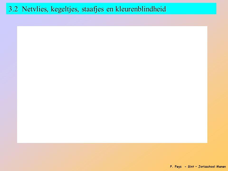 P. Feys - Sint – Jorisschool Menen 3.2 Netvlies, kegeltjes, staafjes en kleurenblindheid