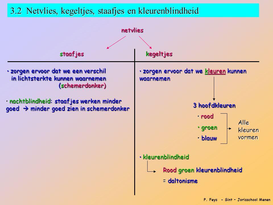 P. Feys - Sint – Jorisschool Menen 3.2 Netvlies, kegeltjes, staafjes en kleurenblindheid netvlies staafjes kegeltjes • zorgen ervoor dat we een versch
