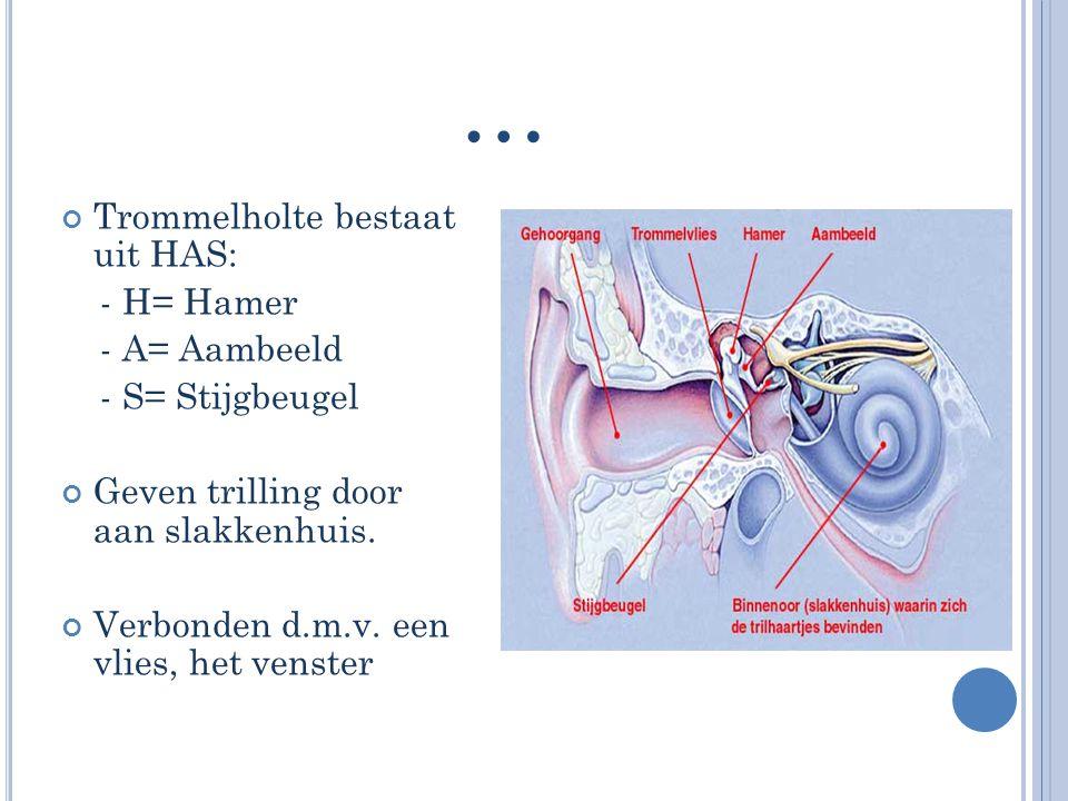 … Trommelholte bestaat uit HAS: - H= Hamer - A= Aambeeld - S= Stijgbeugel Geven trilling door aan slakkenhuis. Verbonden d.m.v. een vlies, het venster