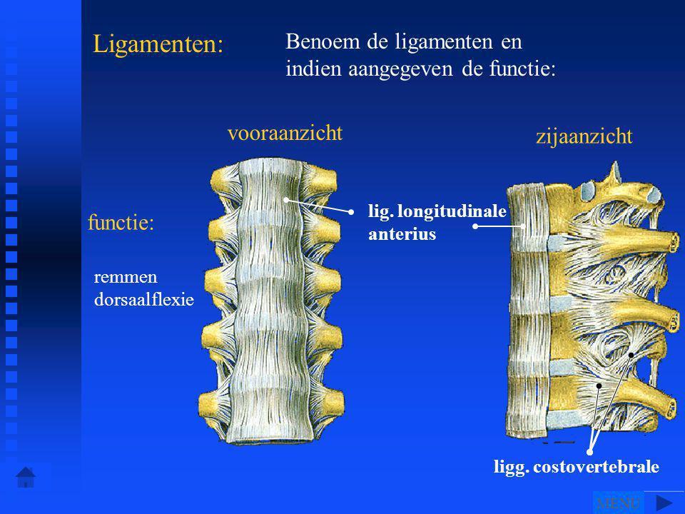 vooraanzicht zijaanzicht Ligamenten: Benoem de ligamenten en indien aangegeven de functie: ligg.