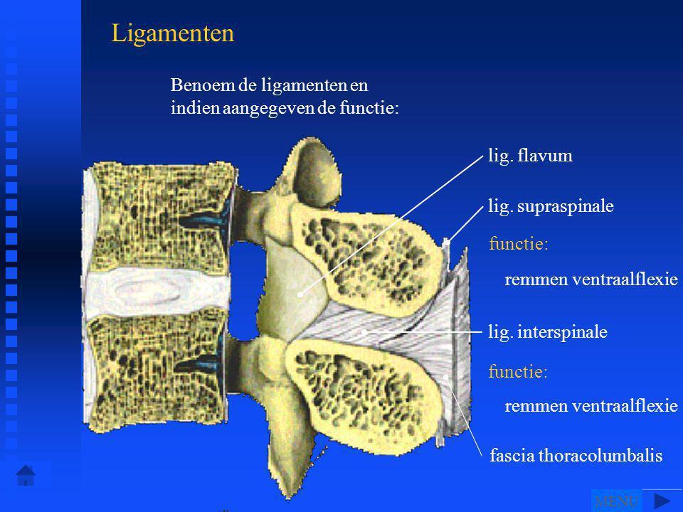 lig.flavum lig. interspinale functie: lig.