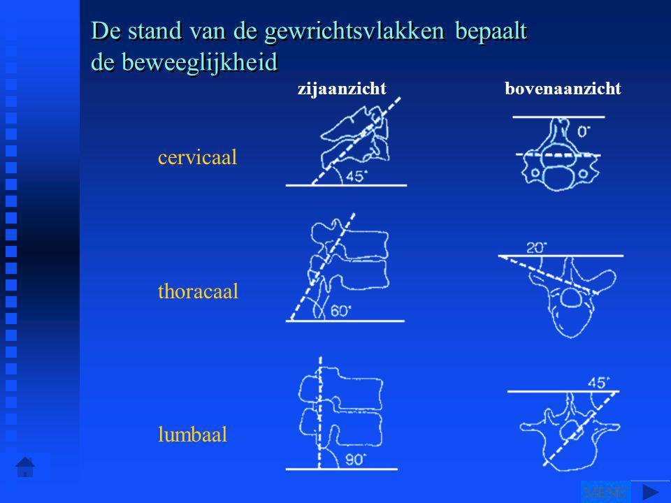 De stand van de gewrichtsvlakken bepaalt de beweeglijkheid cervicaal thoracaal lumbaal zijaanzichtbovenaanzicht MENU