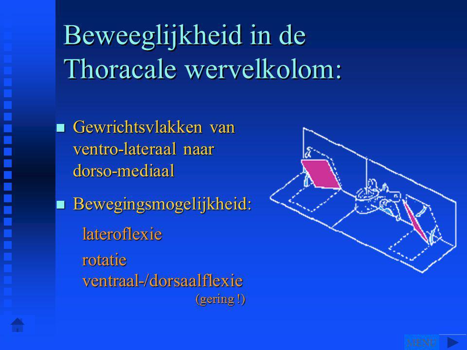 n Gewrichtsvlakken van ventro-lateraal naar dorso-mediaal n Bewegingsmogelijkheid: lateroflexie lateroflexie rotatie rotatie ventraal-/dorsaalflexie (gering !) ventraal-/dorsaalflexie (gering !) Beweeglijkheid in de Thoracale wervelkolom: MENU