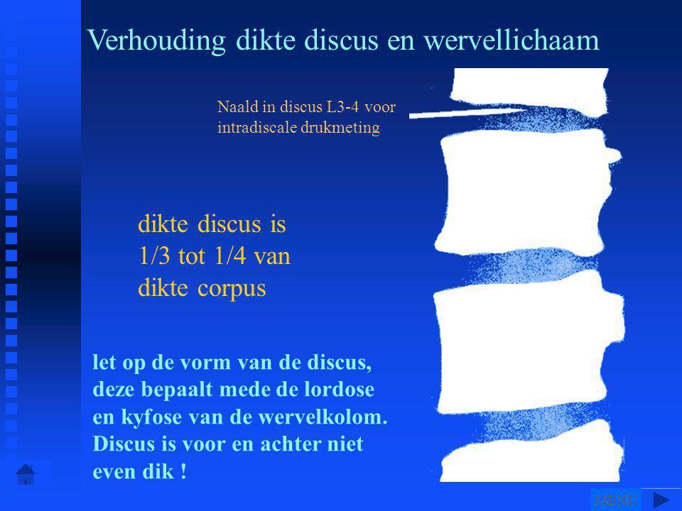 Naald in discus L3-4 voor intradiscale drukmeting dikte discus is 1/3 tot 1/4 van dikte corpus Verhouding dikte discus en wervellichaam let op de vorm van de discus, deze bepaalt mede de lordose en kyfose van de wervelkolom.