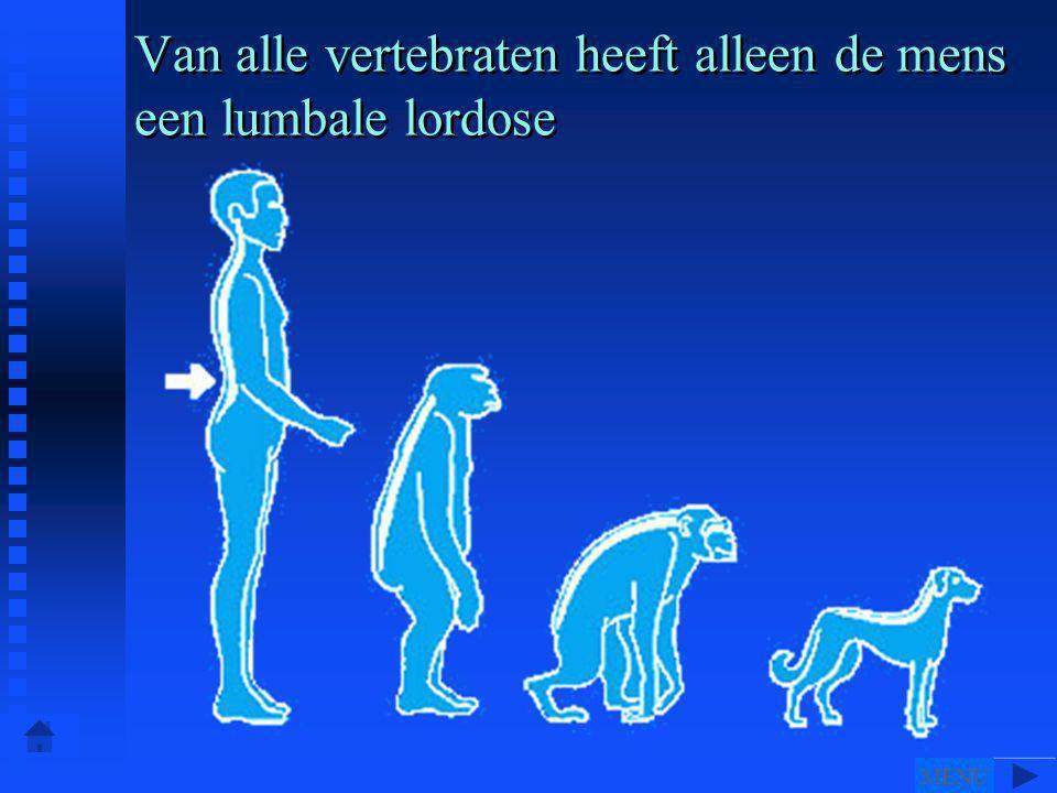 Van alle vertebraten heeft alleen de mens een lumbale lordose MENU
