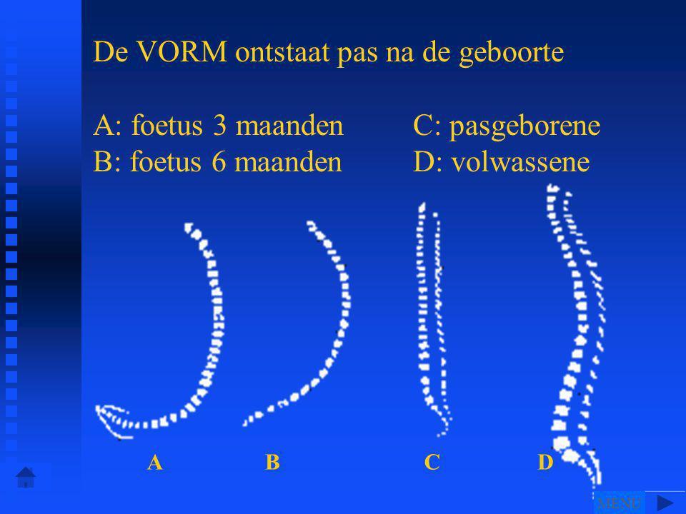 De VORM ontstaat pas na de geboorte A: foetus 3 maanden C: pasgeborene B: foetus 6 maanden D: volwassene ABCD MENU