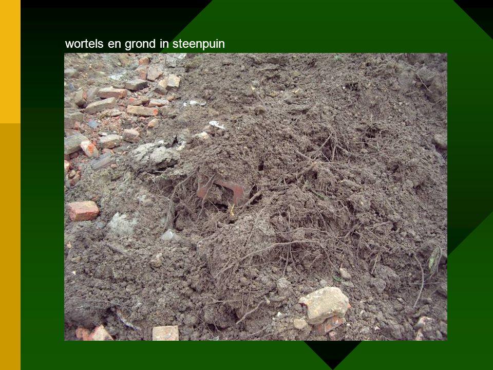 wortels en grond in steenpuin
