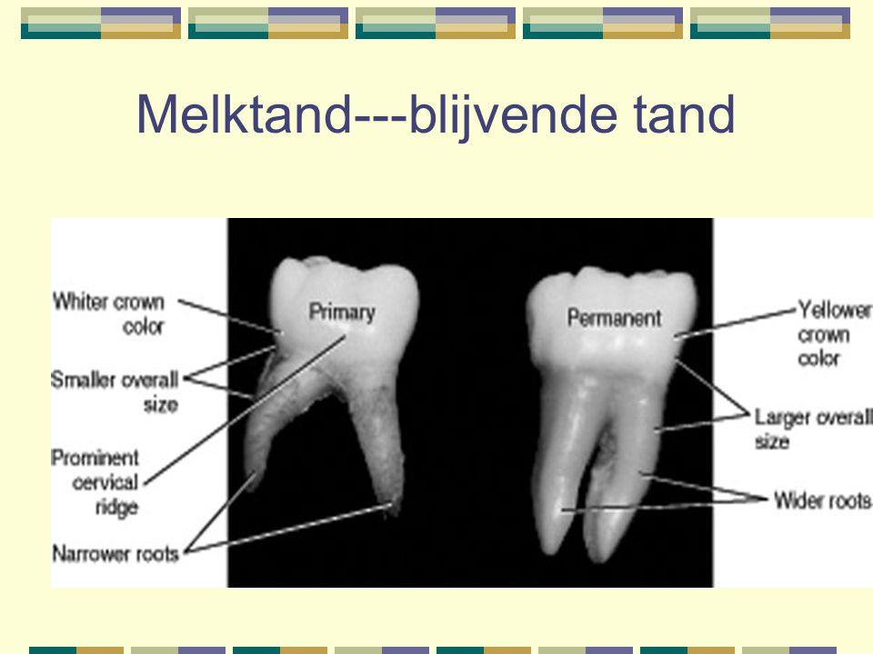 Melktand---blijvende tand