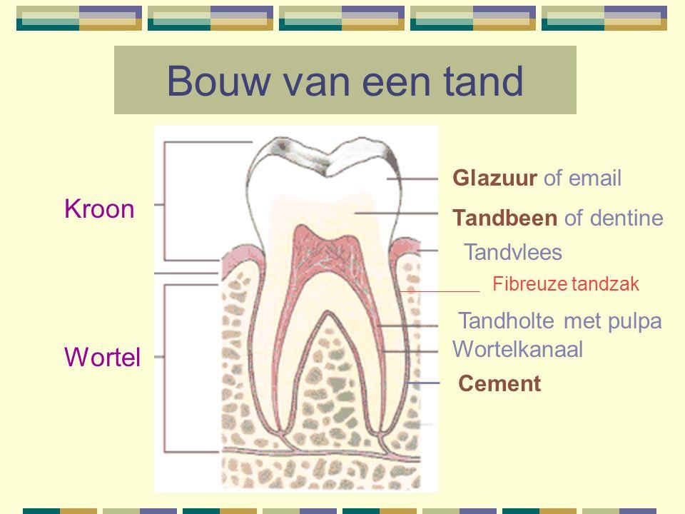 Bouw van een tand Kroon Wortel Glazuur of email Tandbeen of dentine Tandvlees Cement Wortelkanaal Tandholte met pulpa Fibreuze tandzak