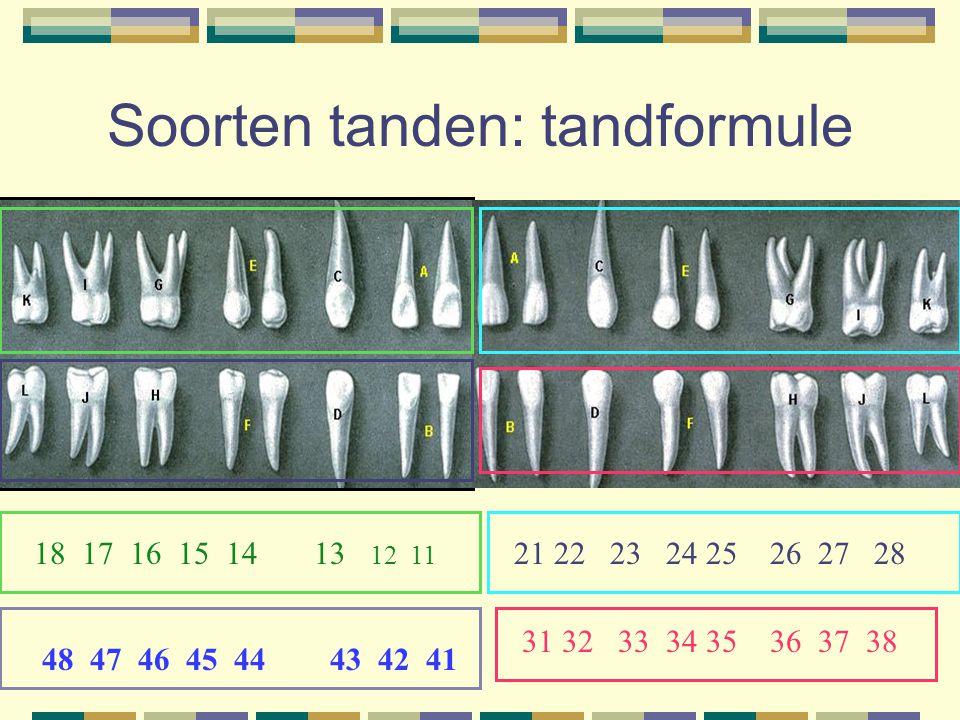Soorten tanden: tandformule 48 47 46 45 44 43 42 41 18 17 16 15 14 13 12 11 21 22 23 24 25 26 27 28 31 32 33 34 35 36 37 38