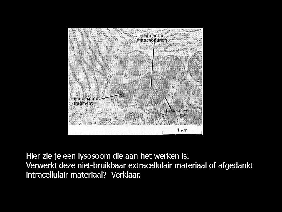Hier zie je een lysosoom die aan het werken is. Verwerkt deze niet-bruikbaar extracellulair materiaal of afgedankt intracellulair materiaal? Verklaar.