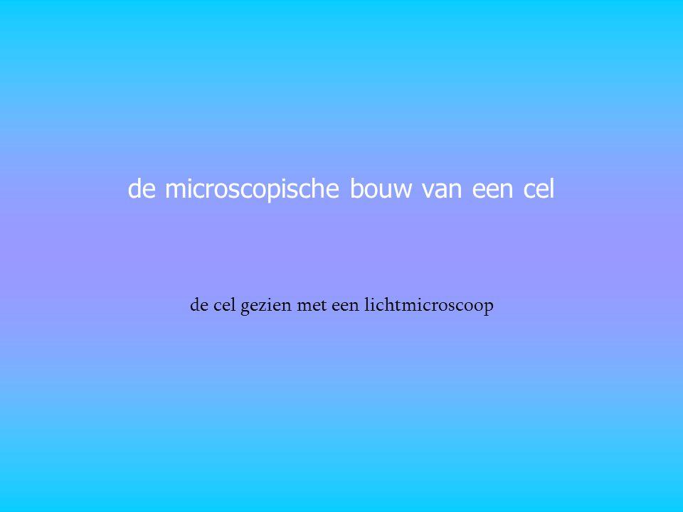 de microscopische bouw van een cel de cel gezien met een lichtmicroscoop